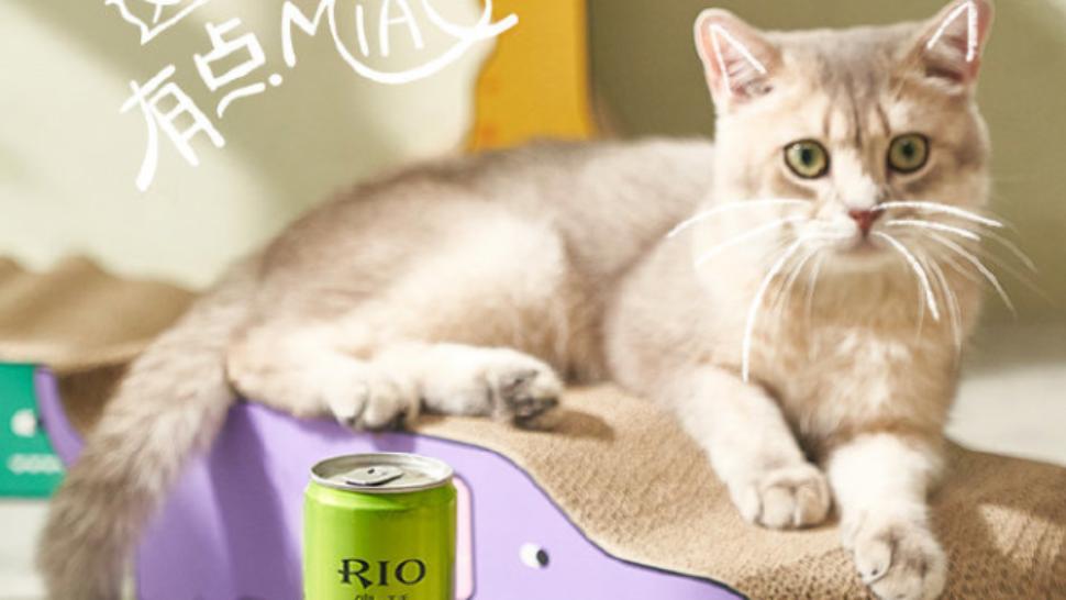 RIO 猫片:这酒味道有点 miao