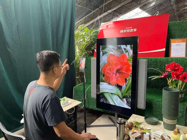 从事花卉行业17年转型线上 唐山夫妇在快手把朱顶红卖到全国